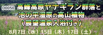 国内旅行_ヤナギラン