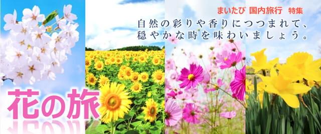 国内旅行_花の旅